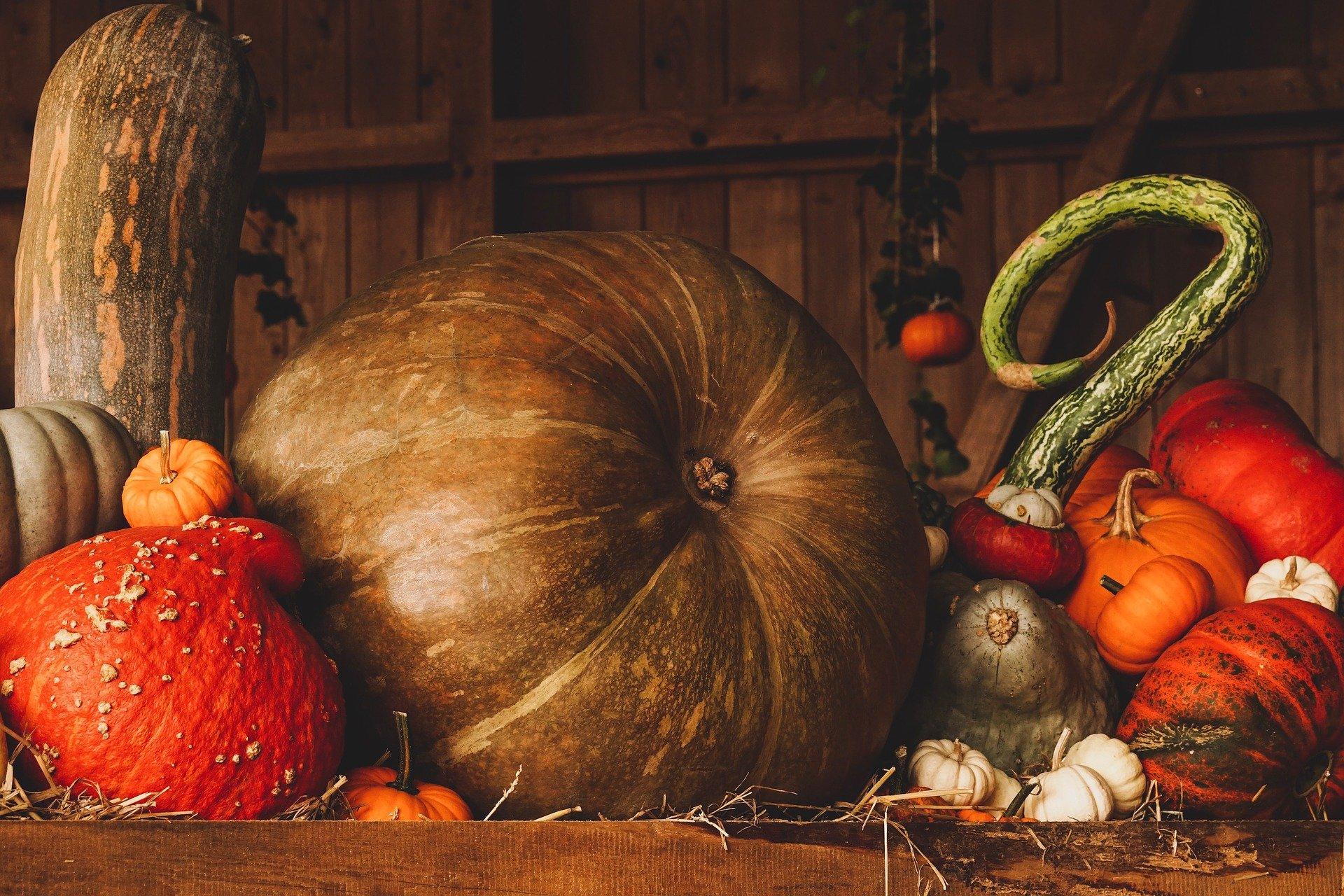 pumpkin-3698130_1920